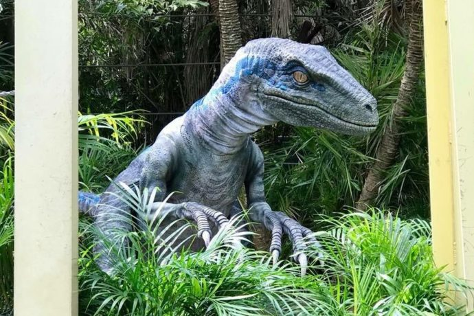 blue from jurassic world now meeting guests at raptor encounter in